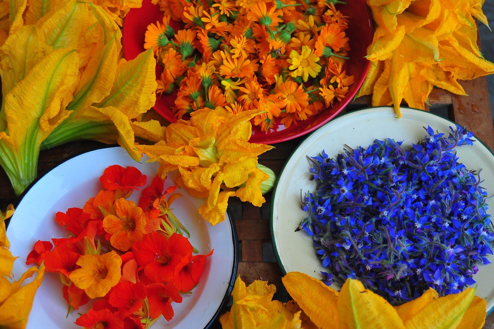 Βρωσιμα λουλουδια στο πιατο μας